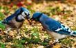 """Tiết lộ thú vị từ khoa học: Loài chim cũng sở hữu """"hormone tình yêu"""" giống con người"""