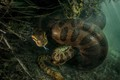 Nói đến trăn Anaconda ai cũng sợ nhưng ẩn sau bức hình này là sự thật mà ai nghe cũng dựng tóc gáy