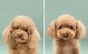 8 chú chó thật bảnh sau khi bước ra khỏi tiệm làm tóc