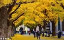 Kỳ thi Du học Nhật Bản đợt 1 năm 2018 và học bổng của tổ chức Jasso