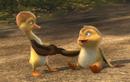 """Duck Duck Goose - Cuộc hành trình """"cười ra nước mắt"""" của những chú vịt trời vui nhộn"""