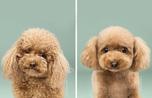 8 chú chó thật bảnh sau khi bước ra hỏi tiệm làm tóc