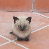 18 chú mèo con với gương mặt như đang hờn cả thế giới