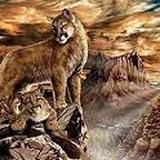 Mắt toét mới không nhìn thấy có bao nhiêu con báo trong vách núi