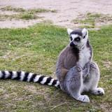 Người hiểu biết về động vật cũng chưa chắc biết 8 con này là gì luôn
