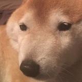 Chân dung 15 khuôn mặt đáng thương của hội nhà chó khi cà khịa với ong