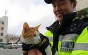 Cô mèo đáng thương mất đi những đứa con và hành động tuyệt vời của lực lượng cảnh sát Busan, Hàn Quốc