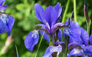 Bạn đang được ngắm nhìn loài hoa có mùi hương hiếm và đắt tiền nhất thế giới đấy