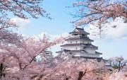 Theo dấu hoa anh đào Nhật Bản chỉ từ 23 triệu tại ngày hội Fukushima
