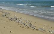 Cá chết hàng loạt tại biển Đà Nẵng, người dân không dám xuống tắm