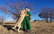 Cô gái Mông Cổ với dàn pet độc 8 con sói, 3 bạn trai đều đòi chia tay vì sợ cãi nàng sẽ bị ăn thịt