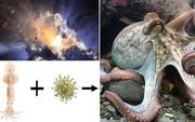 Phát hiện không ngờ về bạch tuộc - đến Trái đất nhờ sao Chổi và là sinh vật ngoài hành tinh?
