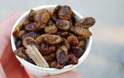 Đừng nói bạn yêu ẩm thực Hàn nếu chưa thử món ăn từ nhộng độc lạ này