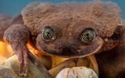 Áp lực cho FA: Đến con ếch cô đơn nhất thế giới cũng có bạn gái rồi đây này