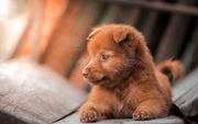 4000 năm trước một con chó trông như thế nào? Câu hỏi không tưởng này cuối cùng đã có đáp án rồi