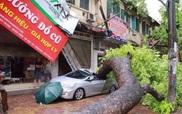 """Hàng chục ô tô ở Hà Nội bị cây đè """"nát bét"""" trong bão số 1"""