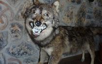 Những xác thú nhồi bông mặt ngáo khiến bạn nhìn phát là cười như ma làm
