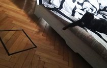 Vẽ vòng tròn để dụ mèo, con sen hoảng hốt khi biết sự thật kinh hoàng về boss nhà mình