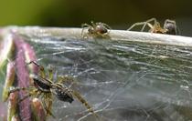 Cơn ác mộng mang tên mạng nhện khổng lồ trải dài trên khắp đồng cỏ