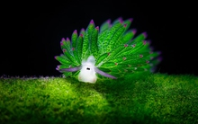 """Loài sinh vật lạ ẩn mình dưới biển """"nhìn là yêu"""""""