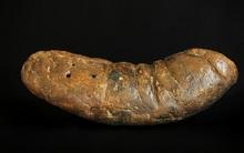 Bất ngờ với những hóa thạch kỳ lạ nhất hành tinh