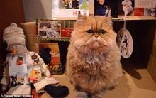 Chú mèo đáng yêu có bộ mặt lúc nào cũng như thất tình