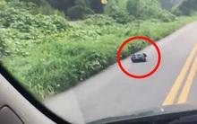 Đang đi làm, người phụ nữ bất ngờ phát hiện điều bất thường bên trong chiếc túi rác bên vệ đường