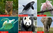 Báo động: 2/3 số động vật hoang dã trên Trái đất bị loài người hủy diệt trong 50 năm vừa qua