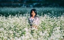Ngắm mùa hoa tam giác mạch đẹp mê mải về ở Hà Giang