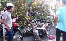 Ba người bị nhánh cây me tây đè trúng trên đường phố Sài Gòn