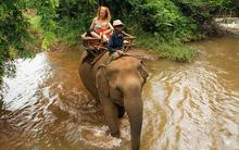 """Campuchia: Voi giẫm chết quản tượng, chạy """"theo gái"""" vào rừng sâu"""