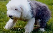 Ghen vì người yêu chiều chó hơn mình, chàng trai dìm chết chú cún nhỏ