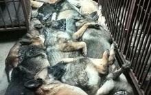 Hình ảnh hàng chục chú chó rà bom bị giết dã man tại Kuwait gây phẫn nộ cộng đồng mạng
