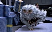 """Làm quen với 6 sinh vật huyền bí bạn sẽ gặp trong """"Fantastic Beast and Where to Find Them"""""""