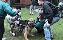 Cuộc sống mới của chú chó bị xiềng xích suốt 10 năm liền