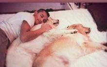 """Tài khoản Instagram của bạn chưa chắc đã """"hot"""" bằng 2 chú chó nhà Alexis Sanchez"""