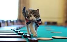 Con mèo ở dinh Thủ tướng Anh tiếp tục nhiệm kỳ mới sau khi ông Cameron rời đi