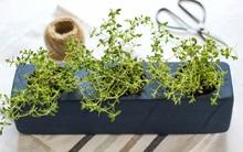 Trồng cây thảo mộc trong hộc trang trí bếp cực xinh