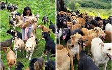 Thiên đường có thực duy nhất trên thế giới cho loài chó đây rồi