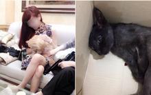 """Hà Nội: Cô gái bị tố bỏ đói chú mèo liệt 1 tháng, thản nhiên nói """"chờ mãi nó không chết""""?"""