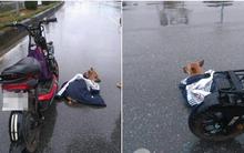 Câu chuyện đáng yêu: Cô bé nhường áo khoác che mưa cho chú cún bị xe đâm trên đường
