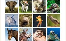 Chọn 1 trong số 12 con vật để biết ưu điểm và khuyết điểm của bản thân mình