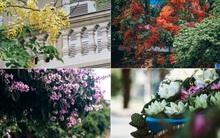 Chùm ảnh: 4 thứ hoa thật đẹp của tháng 6 Hà Nội!