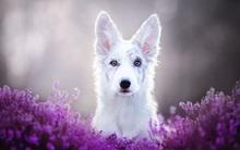 Ngắm nhìn những chú chó làm điệu bên hoa cỏ