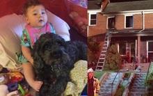 Chú chó anh hùng dùng thân che chắn cứu sống cô chủ nhỏ khỏi cơn hỏa hoạn