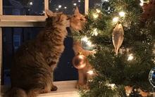 Chuyện tình đẹp như mơ của cặp đôi mèo khiến triệu trái tim tan chảy