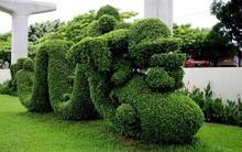 """Tiền mỗi mét """"cắt cỏ"""" ở TP.HCM... không thể lớn như Hà Nội!"""