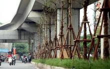 Người Hà Nội ngỡ ngàng với hàng cây xanh dưới gầm đường sắt trên cao