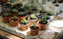 Để 5 loại cây này trong nhà vừa làm sạch không khí vừa tốt cho sức khỏe