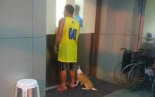 Quá đau lòng vì chủ nhân qua đời, chó cũng quyết tuyệt thực